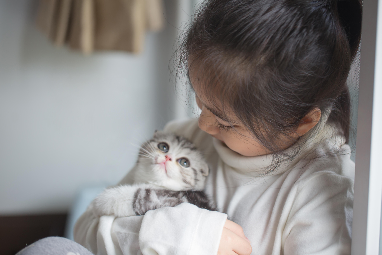 I studien deltog allt som allt ett sjuttiotal kattungar som var mellan 3 till 8 månader gamla.