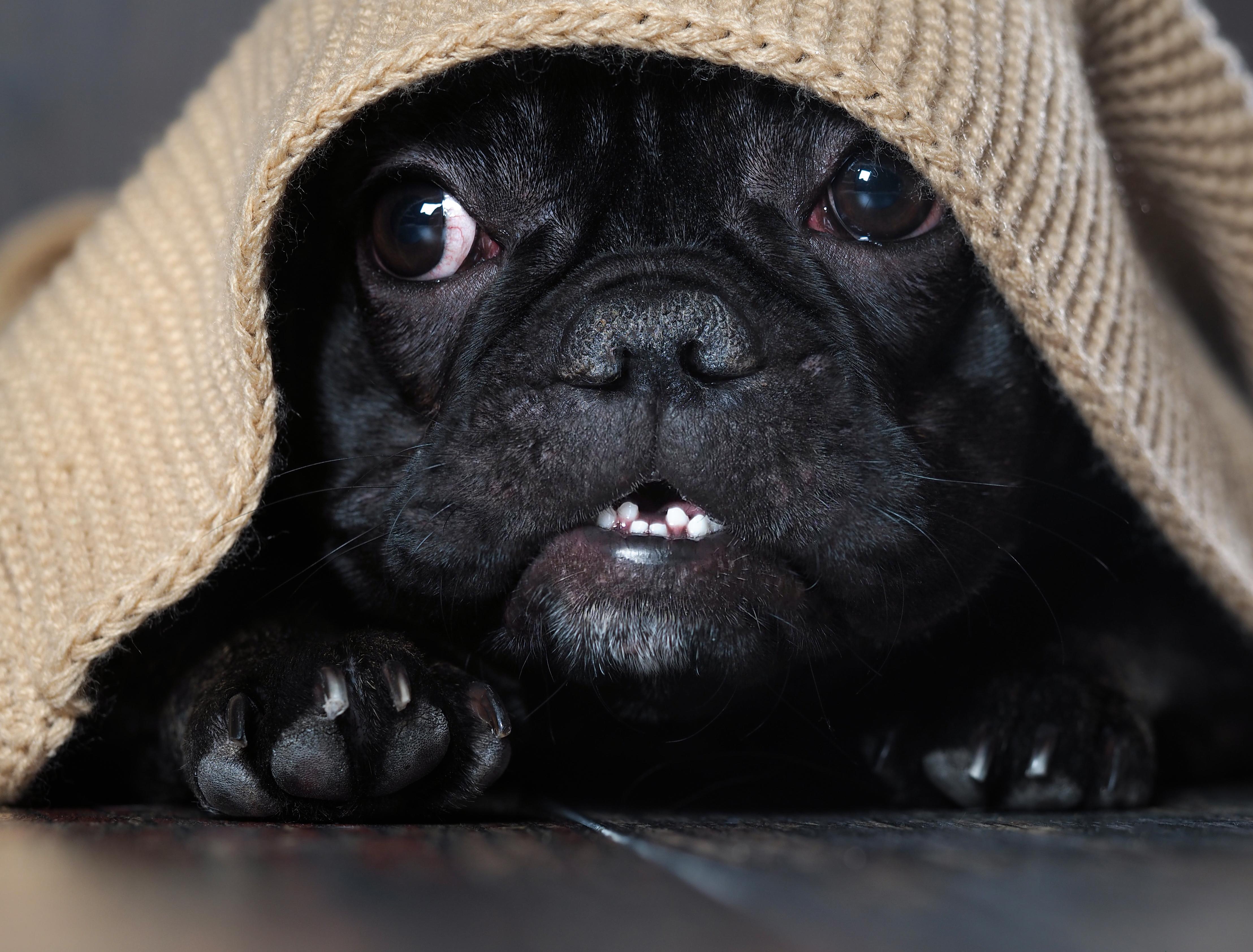 Tips om man har en skotträdd hund är att ge hunden en trygg plats i hemmet och gå ut på promenad i god tid innan smällandet börjar.