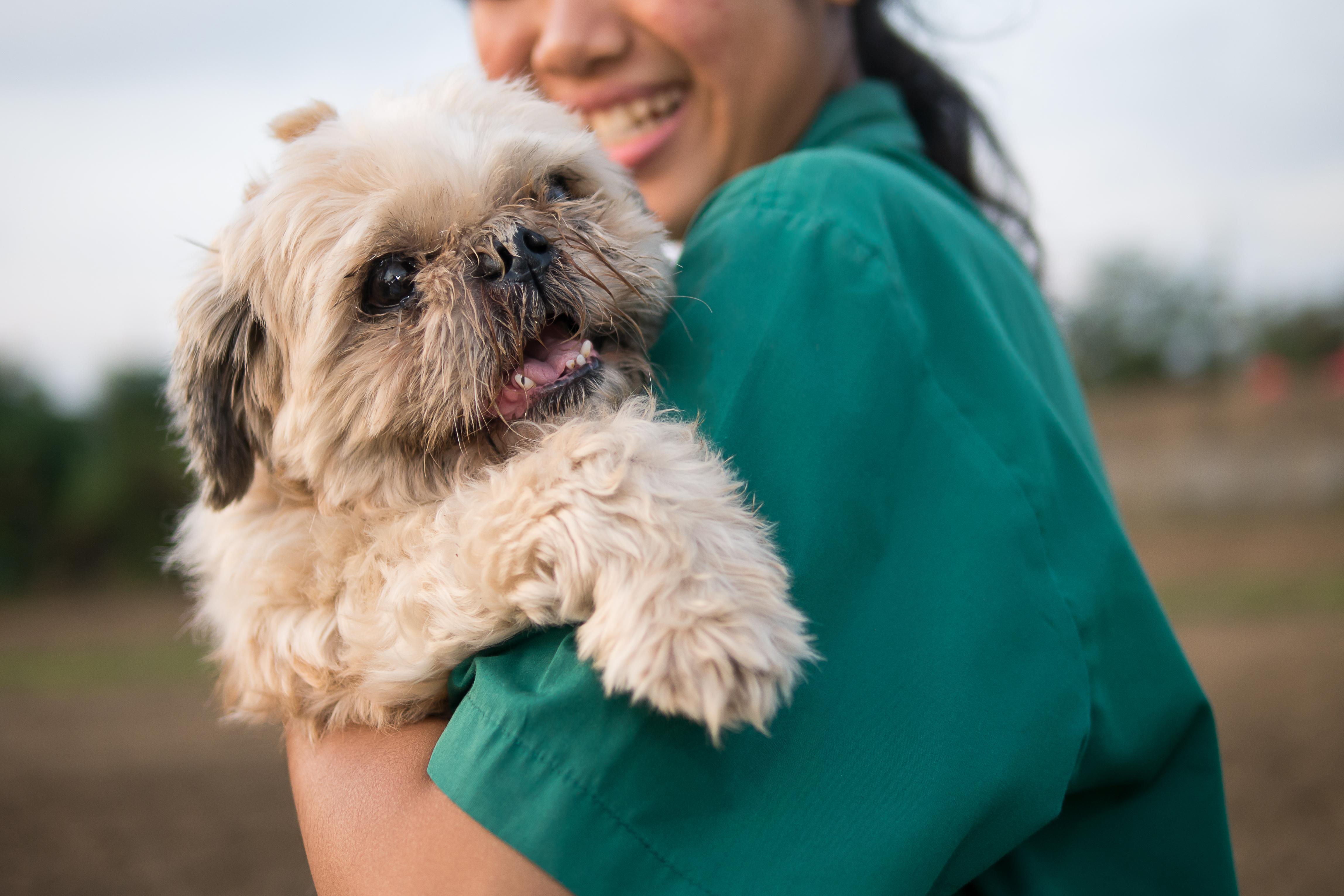 Om du som ägare engagerar dig kan din hund leva ett fullgott liv även med diabetes.