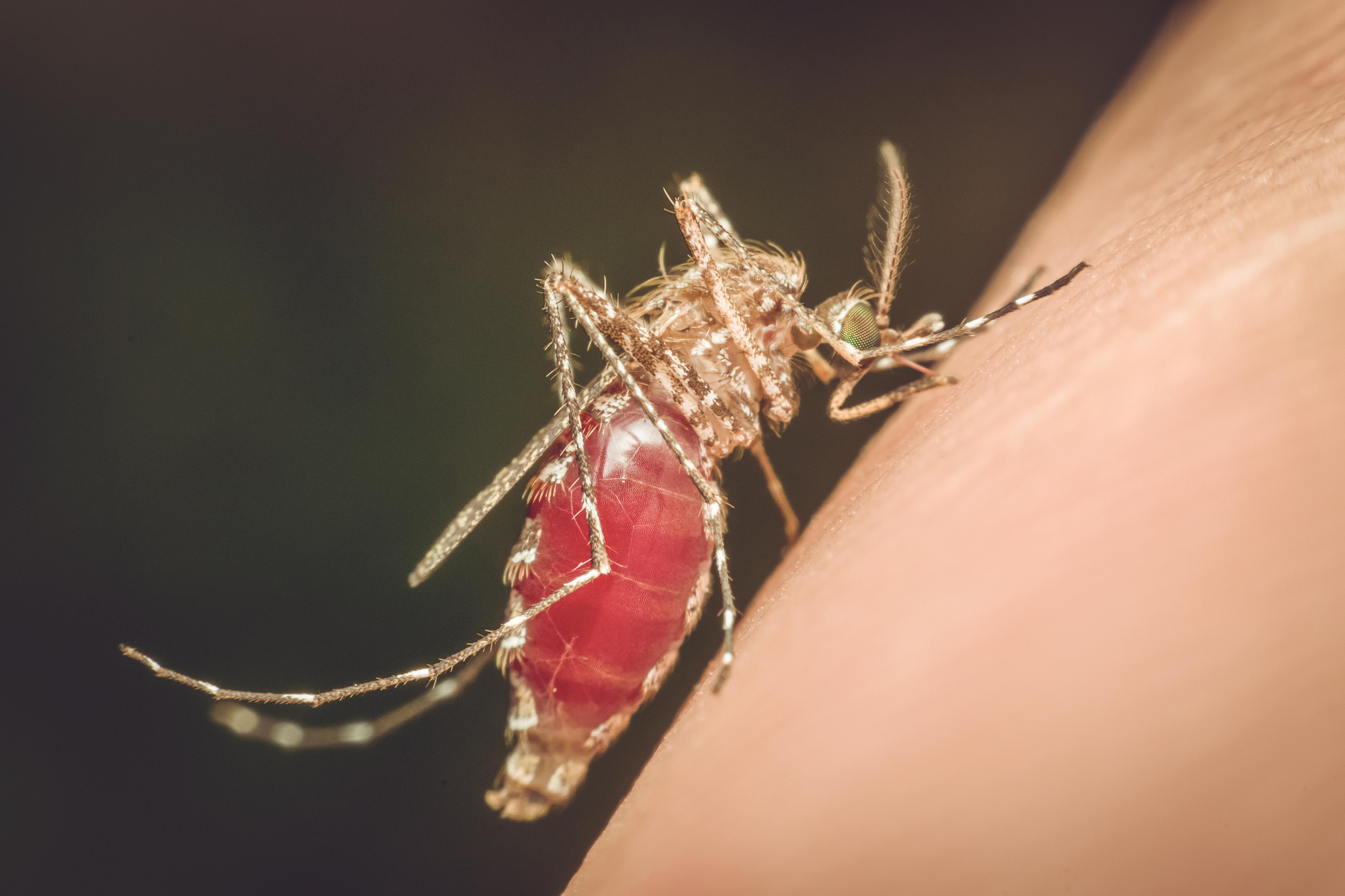 Malaria är en av världens vanligaste och mest allvarliga sjukdomar och sprids via myggor.