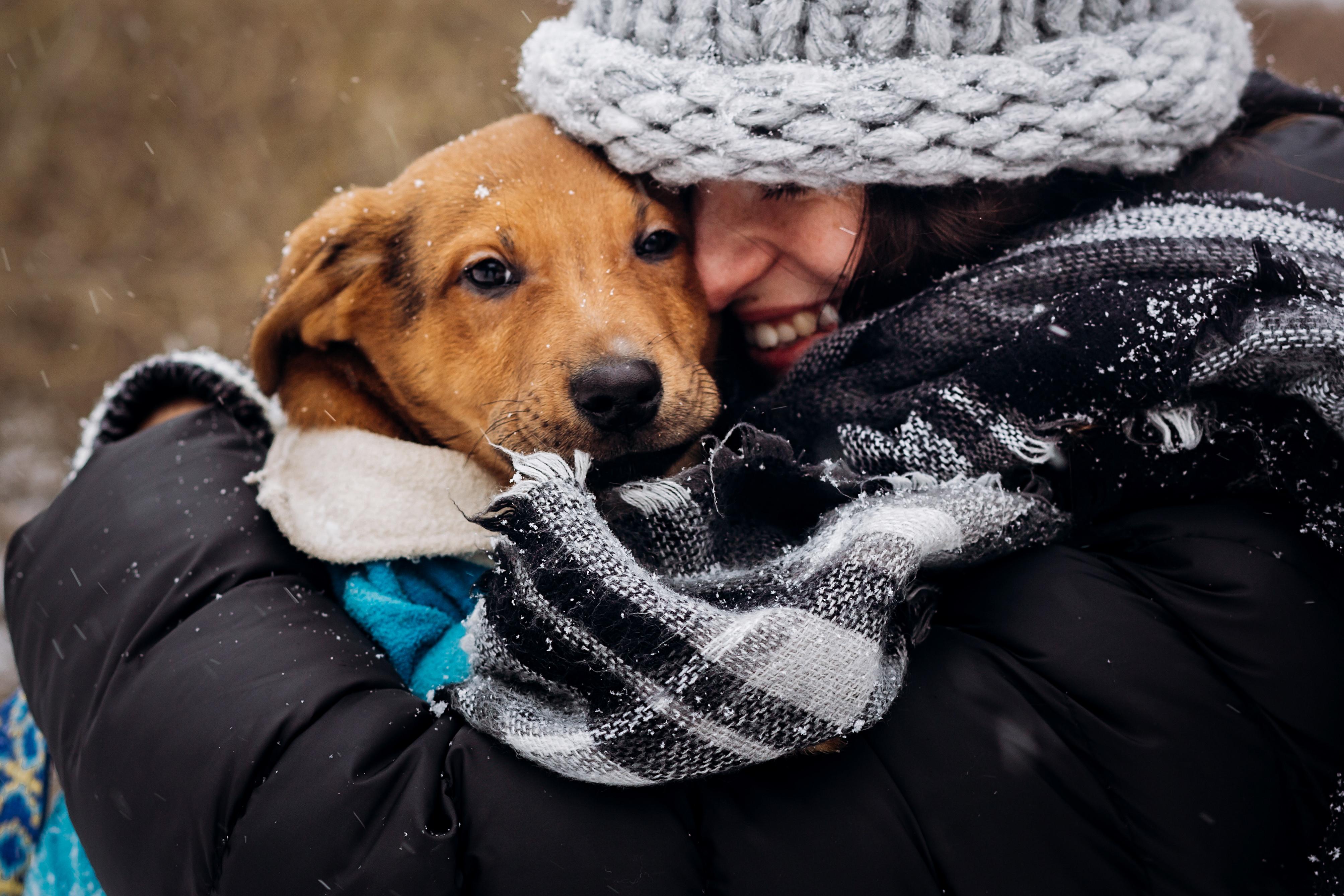 I ensamhushåll noterades lägre risk för hjärtinfarkt och stroke hos hundägarna.