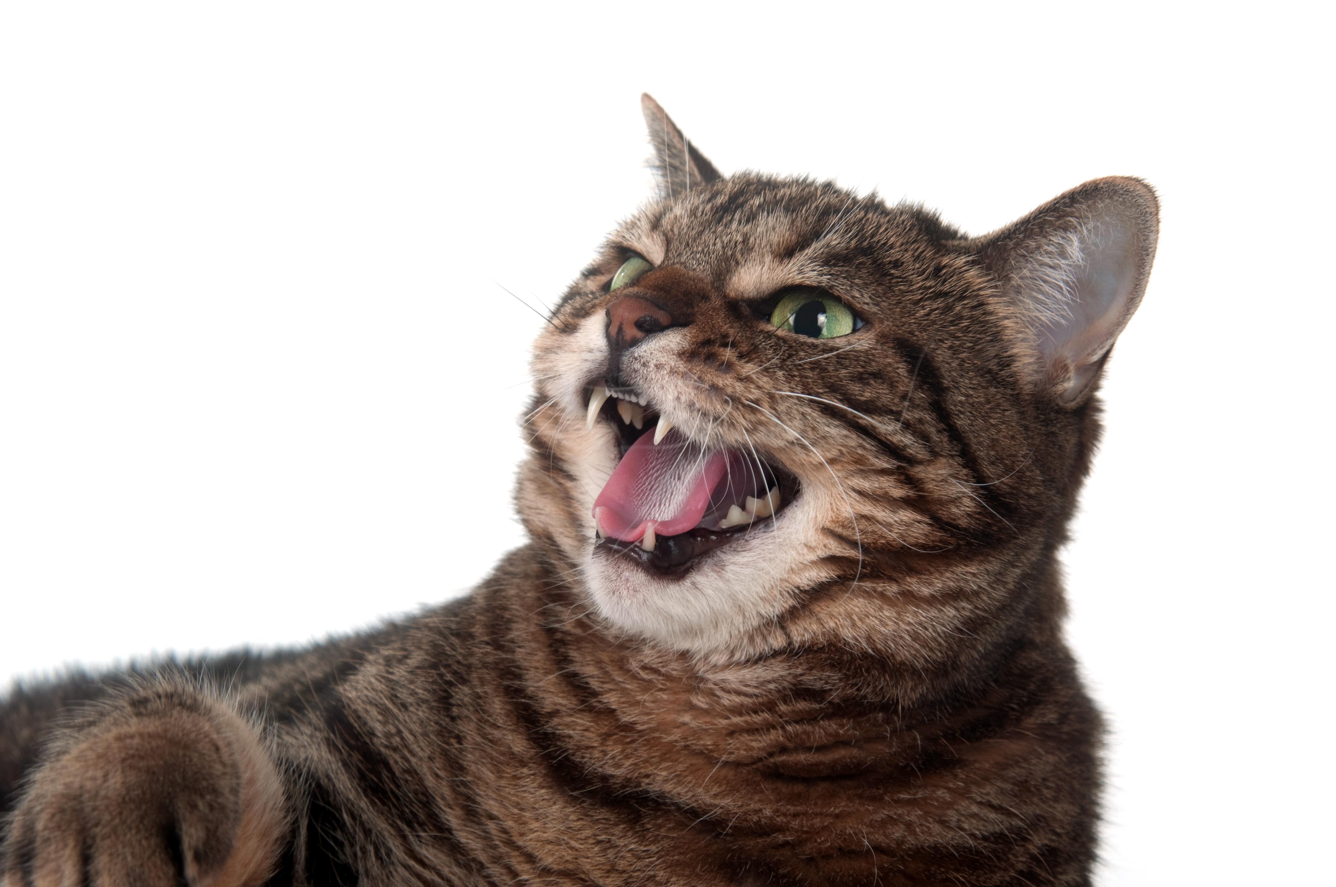 Det är viktigt att söka vård vid kattbett eftersom det kan bli infekterat och leda till stelkramp.