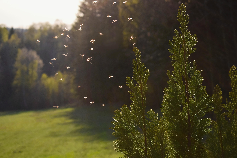 För många förknippas sommaren med insekter och insektsbett som kan bli en riktig plåga.
