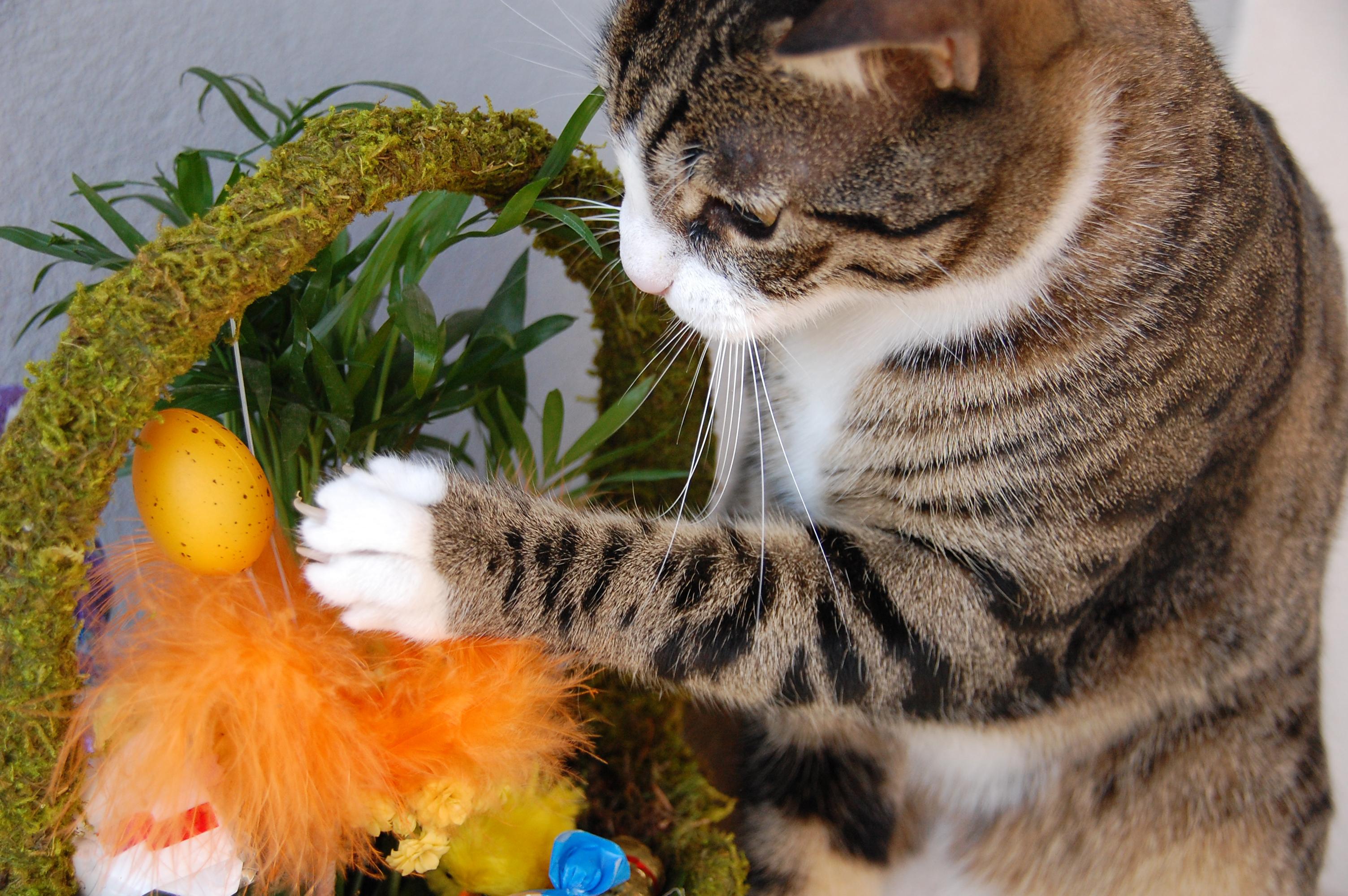 Fjädrar och ris är något som katten kan tycka är skoj att leka med men det är viktigt att tänka på att pyntet inte utgör en fara för din katt.