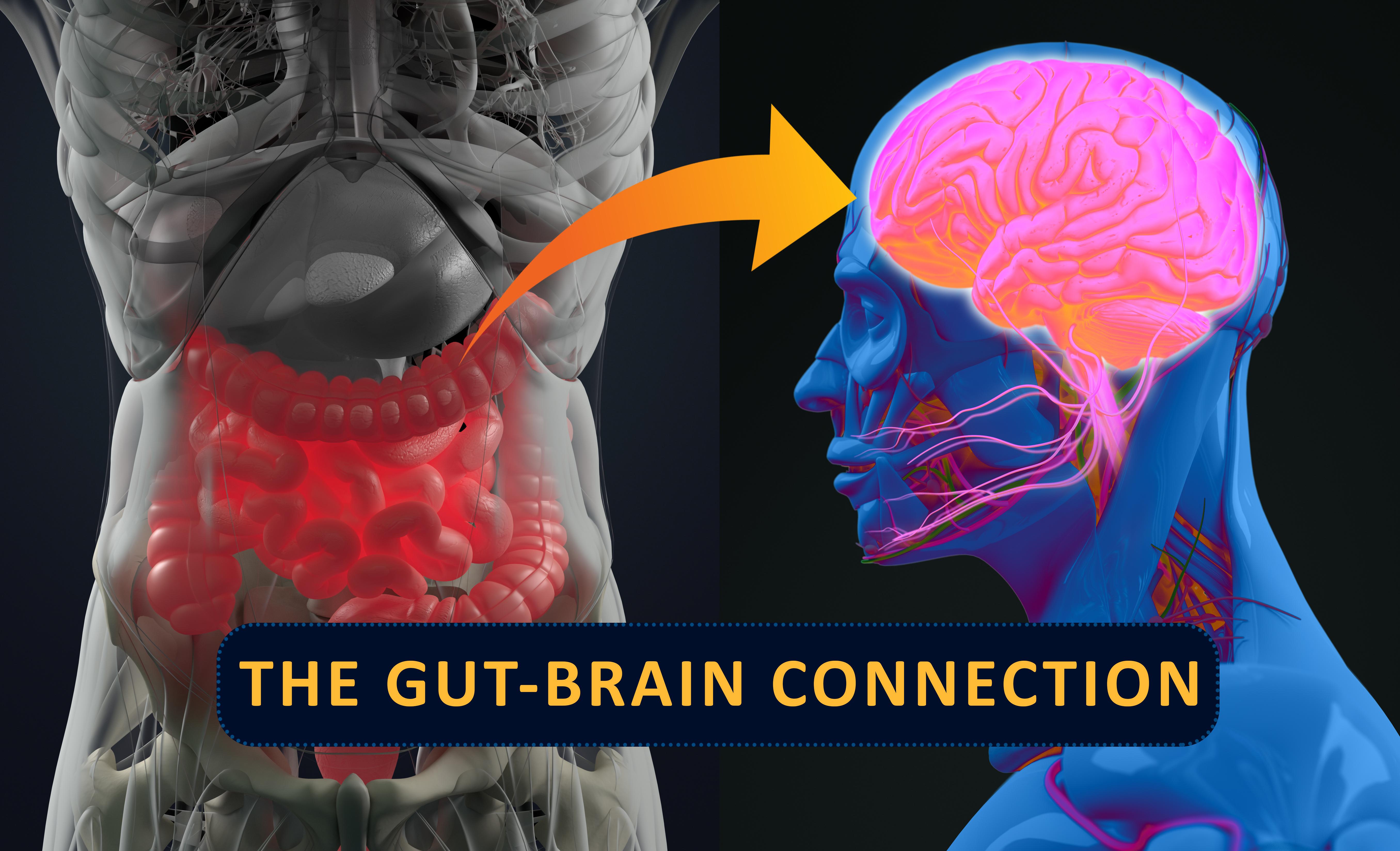 Forskning pekar mot att immunförsvaret, hormonsystemet och det neurologiska systemet, samverkar med tarmens nervsystem. Därför kan mikrobiomet (tarmfloran) ha större inverkan på vår hälsa än vad man tidigare trott.