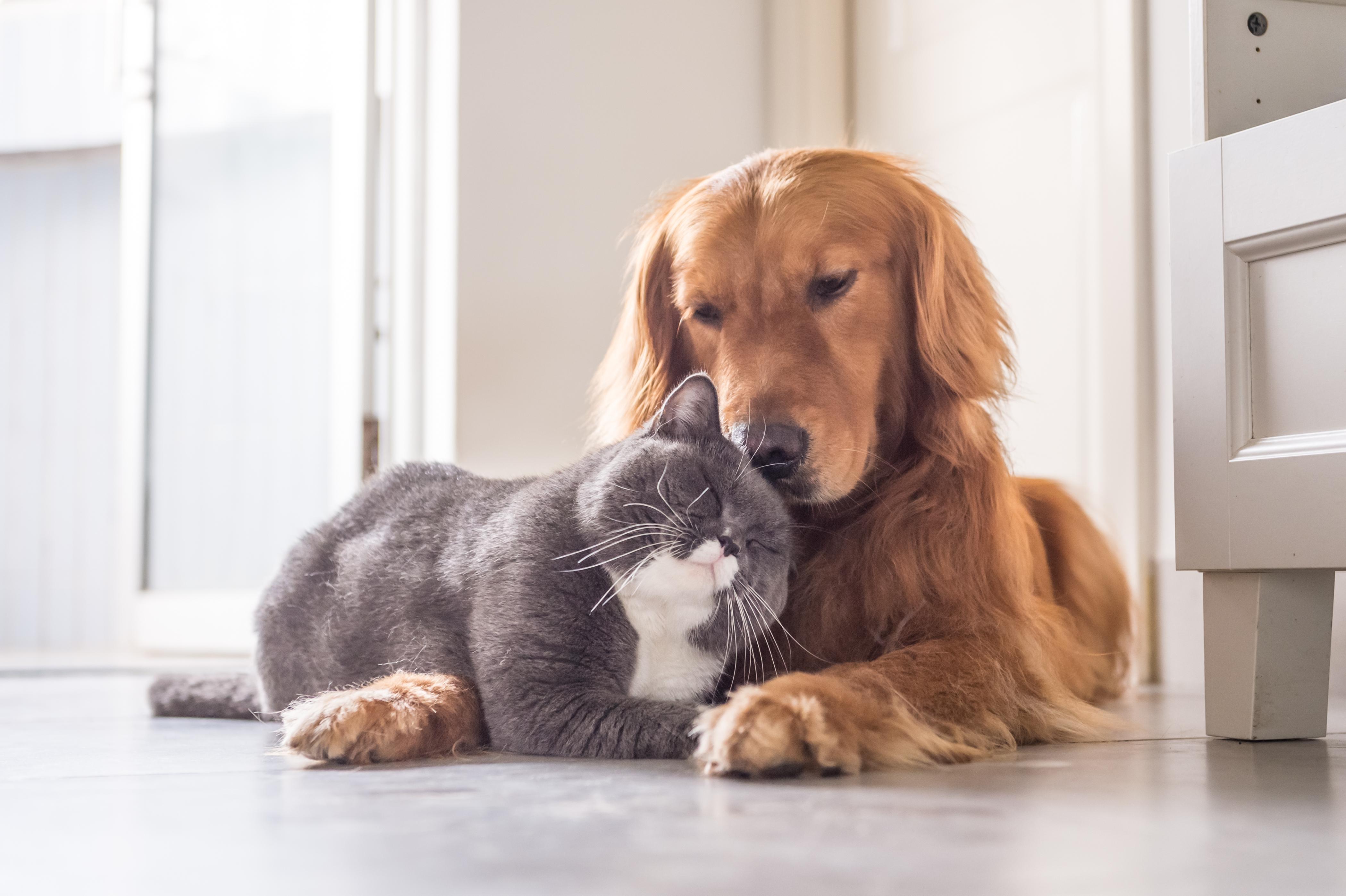 Bland hundar drabbas drygt 25 procent av alla tikar av juvertumörer. Även honkatter kan drabbas.