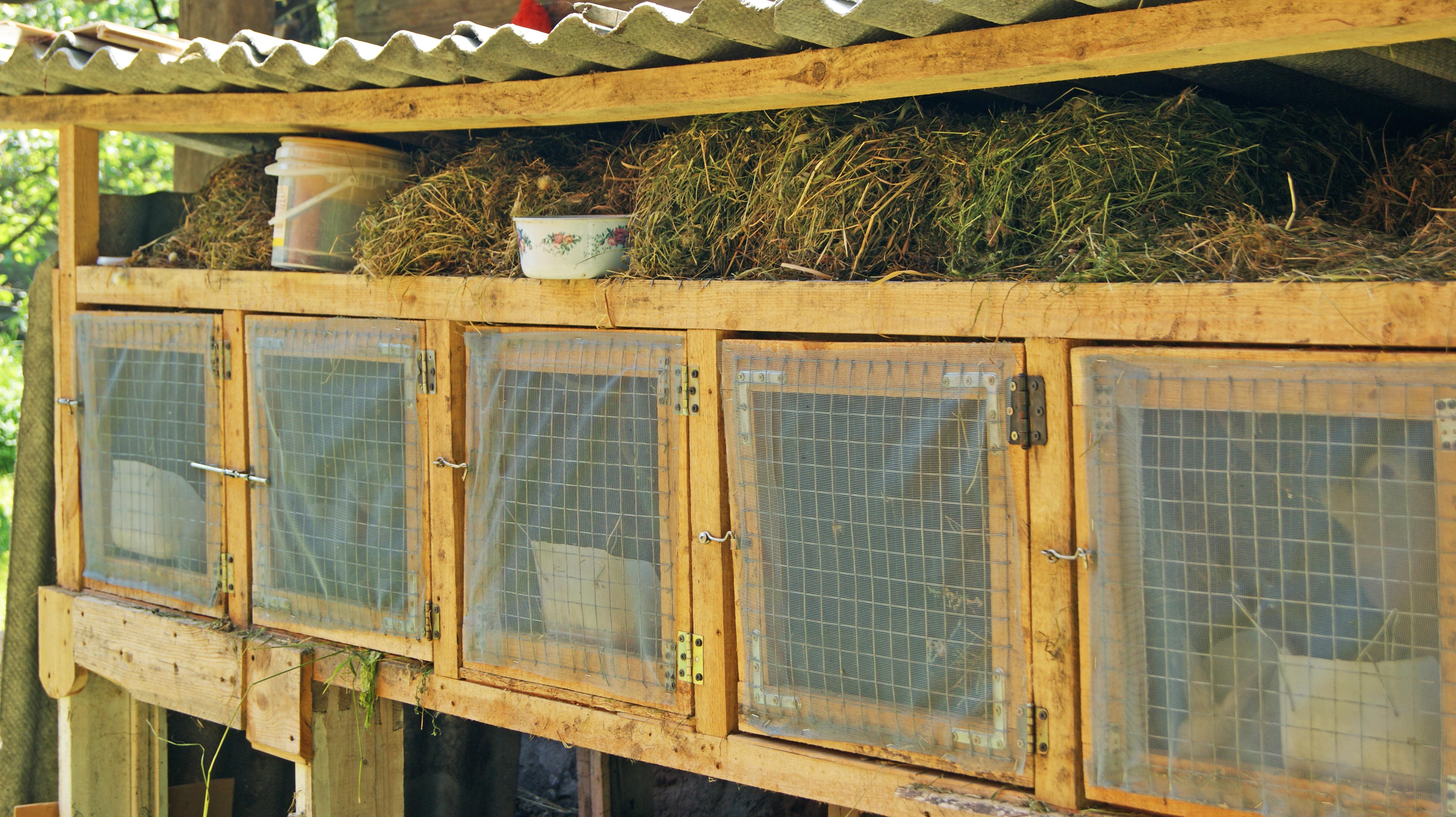 Kaningulsot är mycket smittsamt och överförs vid direktkontakt eller indirekt kontakt. Ett exempel är om vilda kaniner uppehåller sig kring en tamkanins bur, då finns det risk för att smittan sprids indirekt via avföring eller urin.