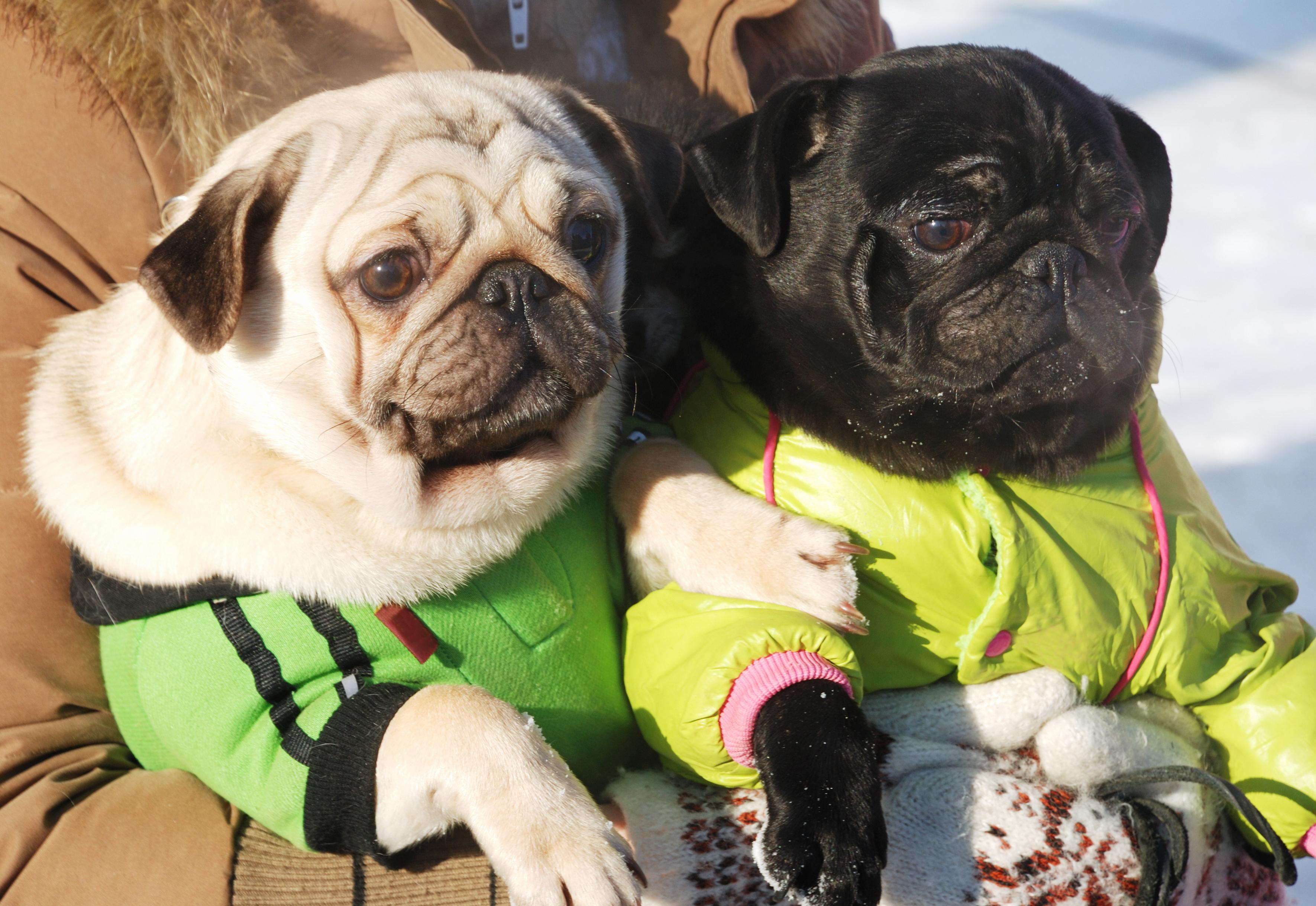 Det finns praktiska hundtäcken och liknande som både håller vädret ute och hunden varm.