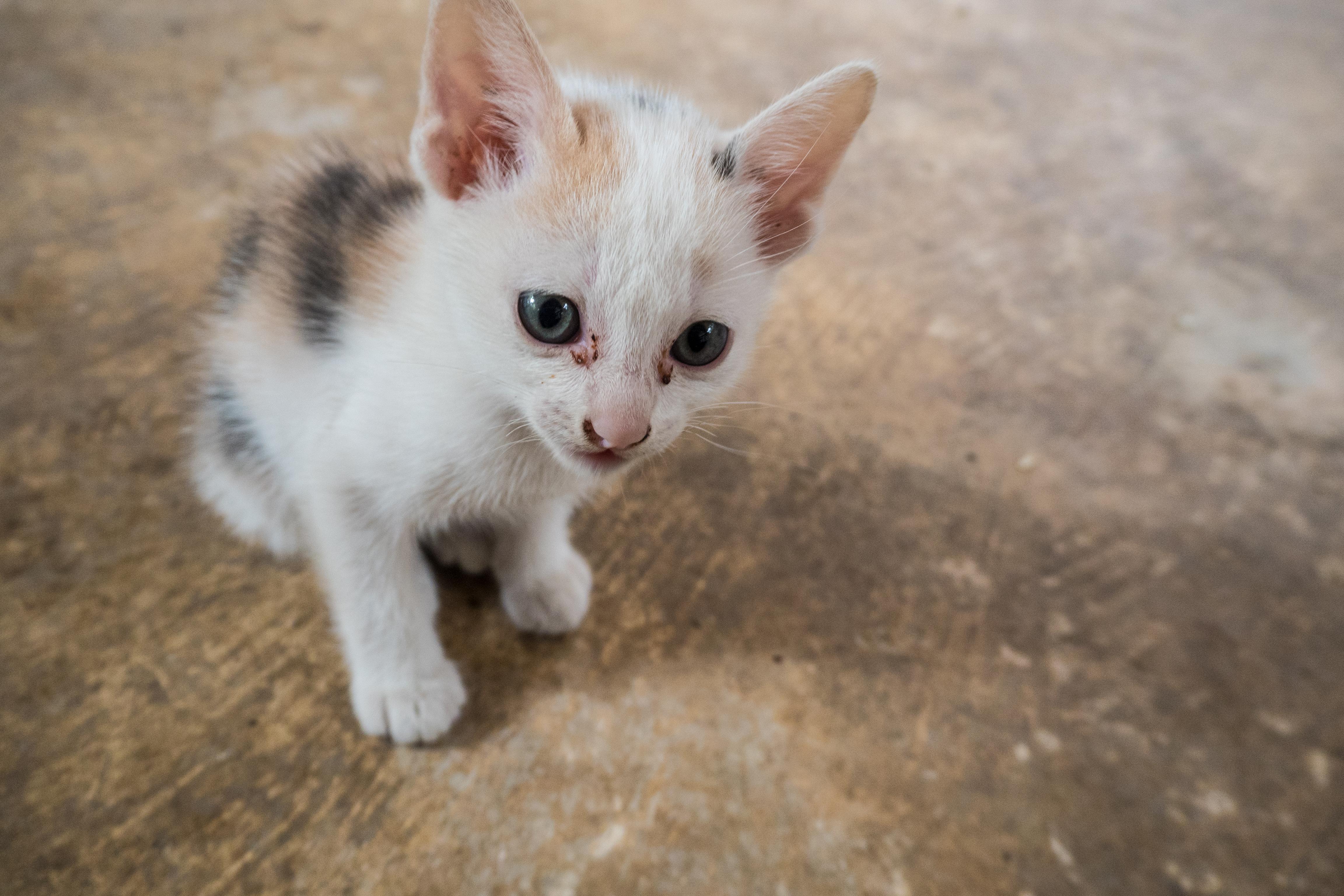 I och med lex Maja tillåtas personal inom vård och omsorg att lämna över uppgifter till länsstyrelser och polis om djur utsätts för vanvård.