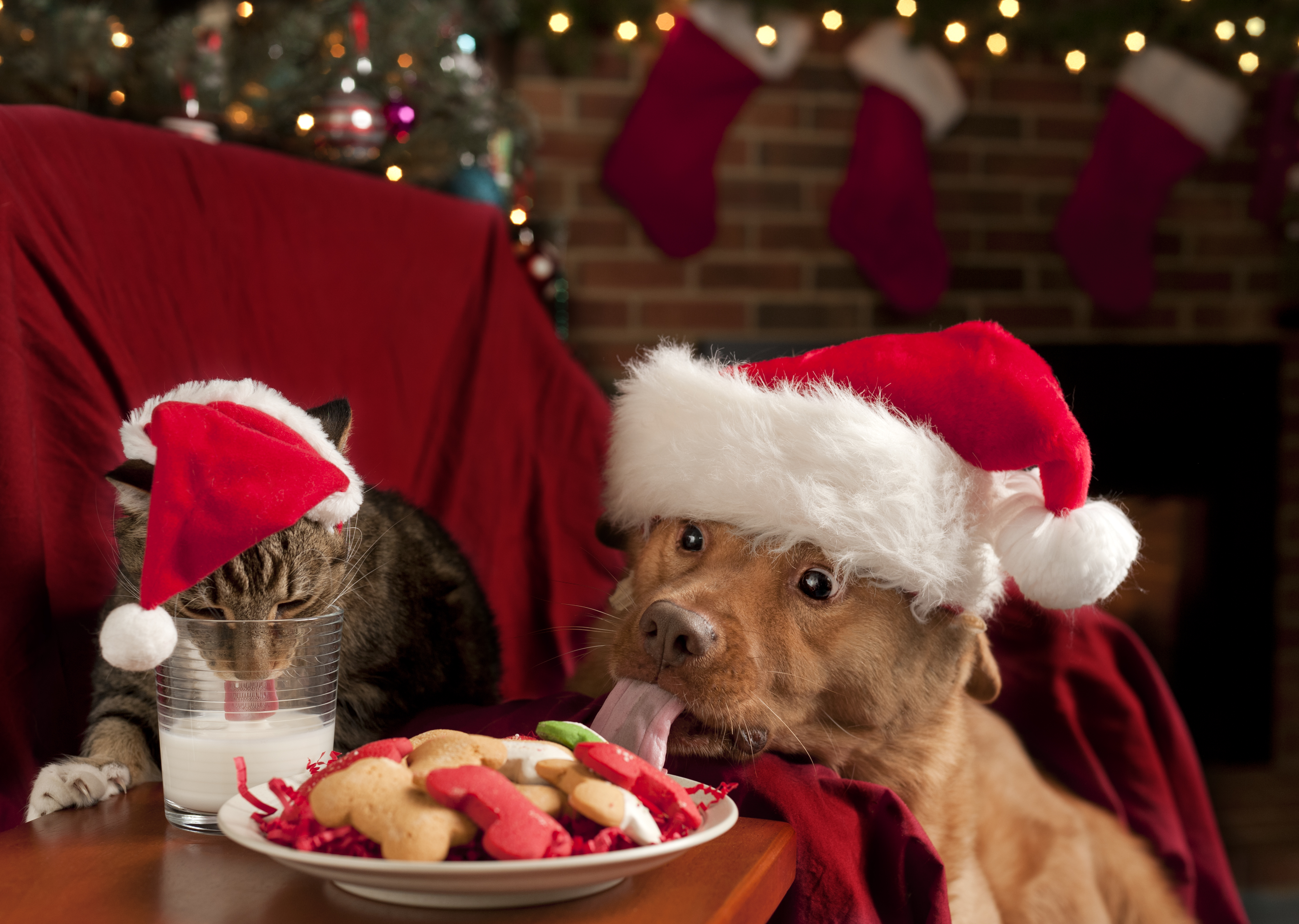 Vegetariska hundkex och leverfyllda kattkakor