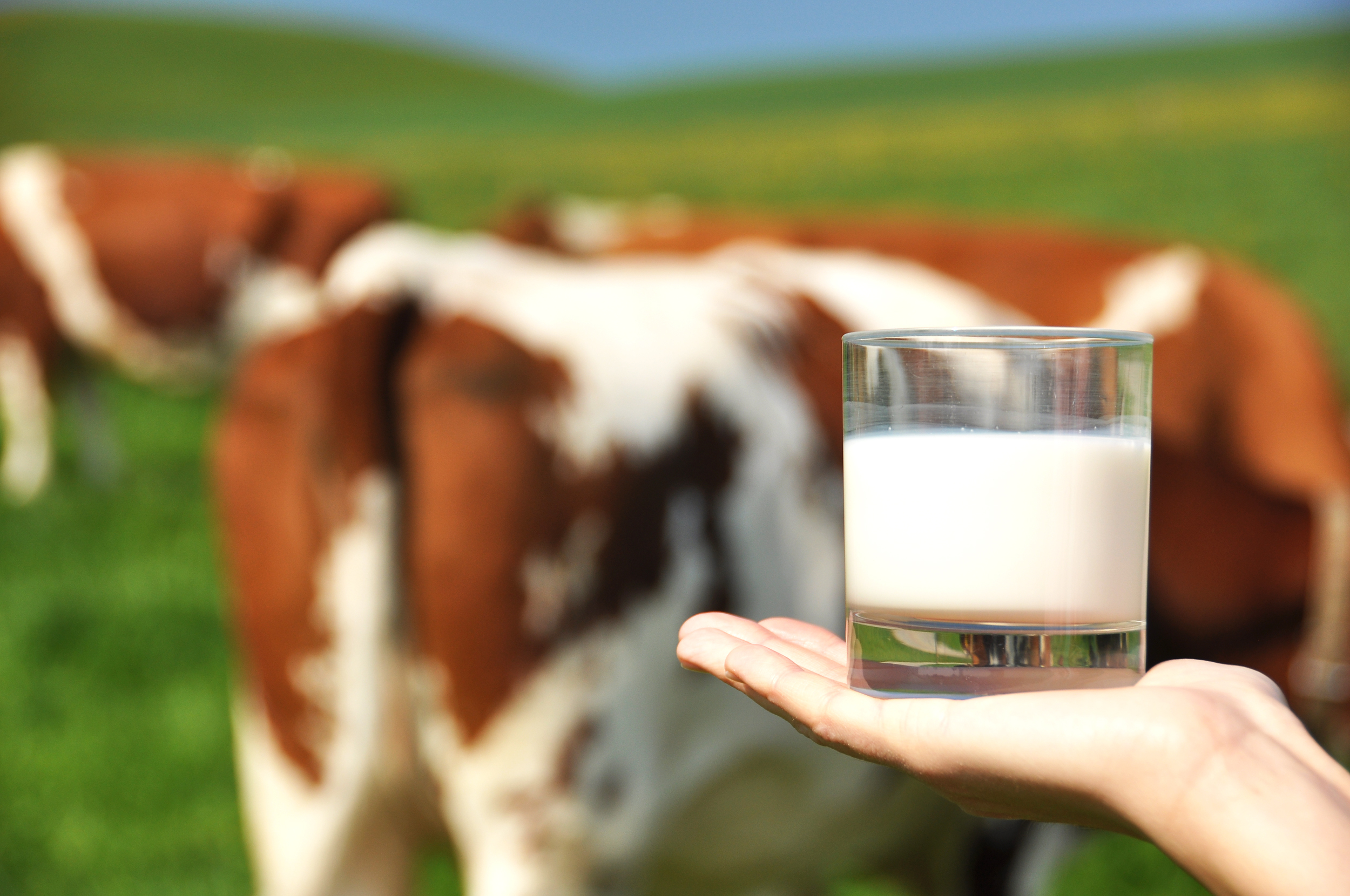 Det kan gå att jämna ut blodsockerkurvan genom att dricka mjölk.