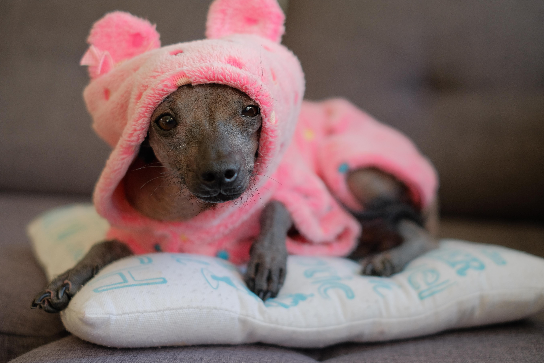 Om det inte är direkt nödvändigt kan det bli en negativ upplevelse för hunden att bära kläder, hur kul matte eller husse än tycker att det är.