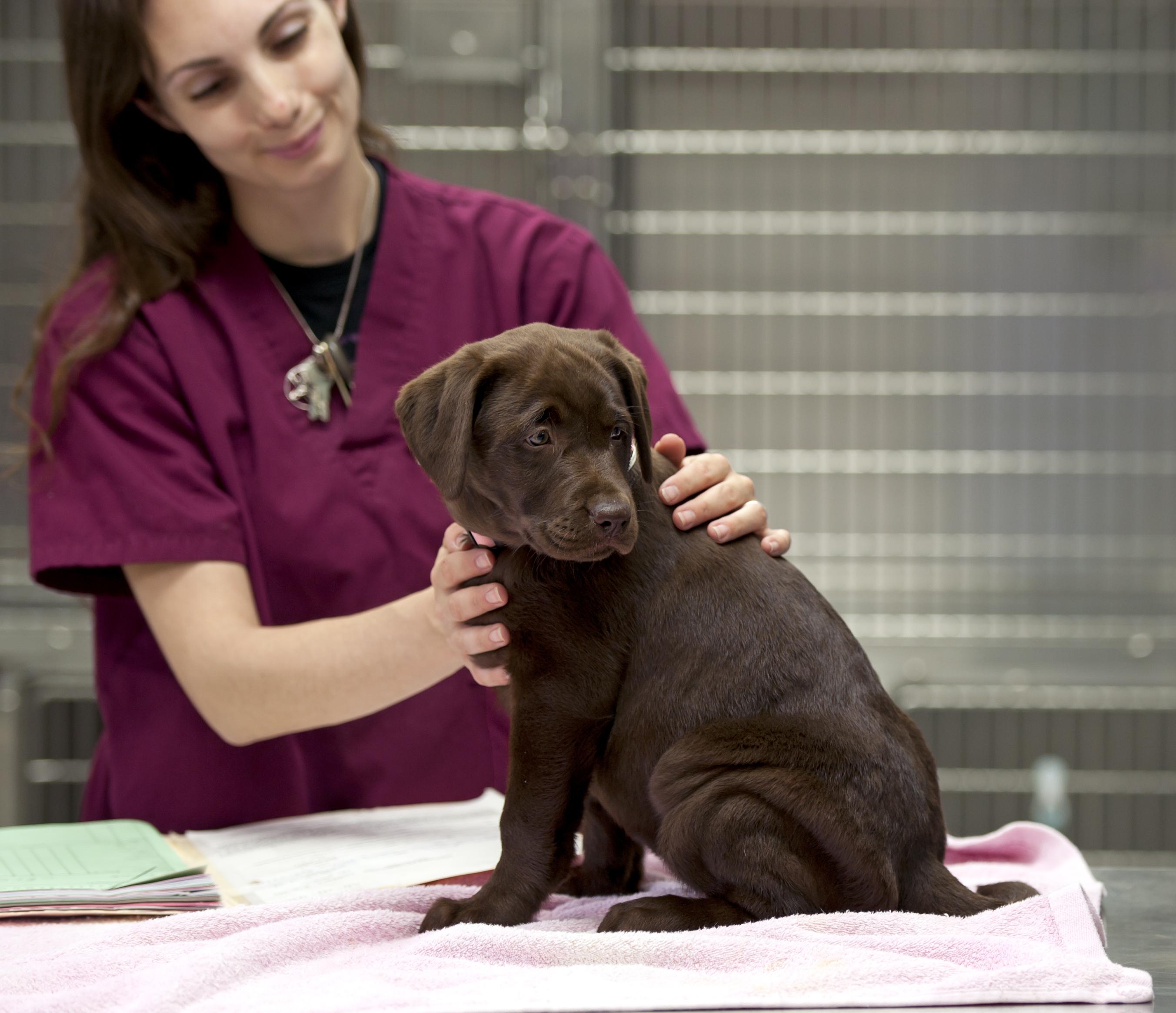 Man räknar med att ungefär 10 procent av Sveriges hundar lider av någon form av allergi.