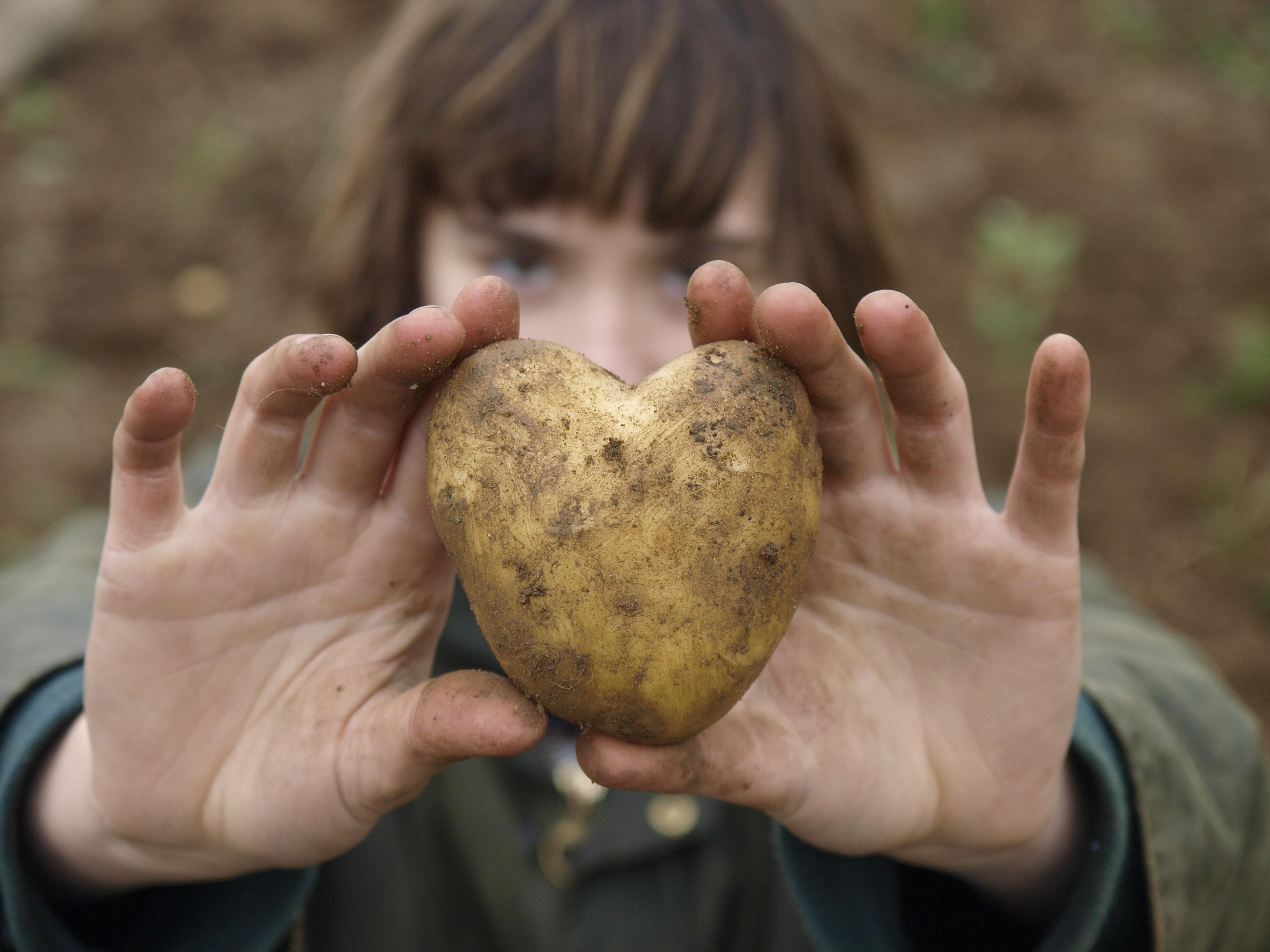 Potatis gav mättnadskänsla vilket ledde till viktminskning.