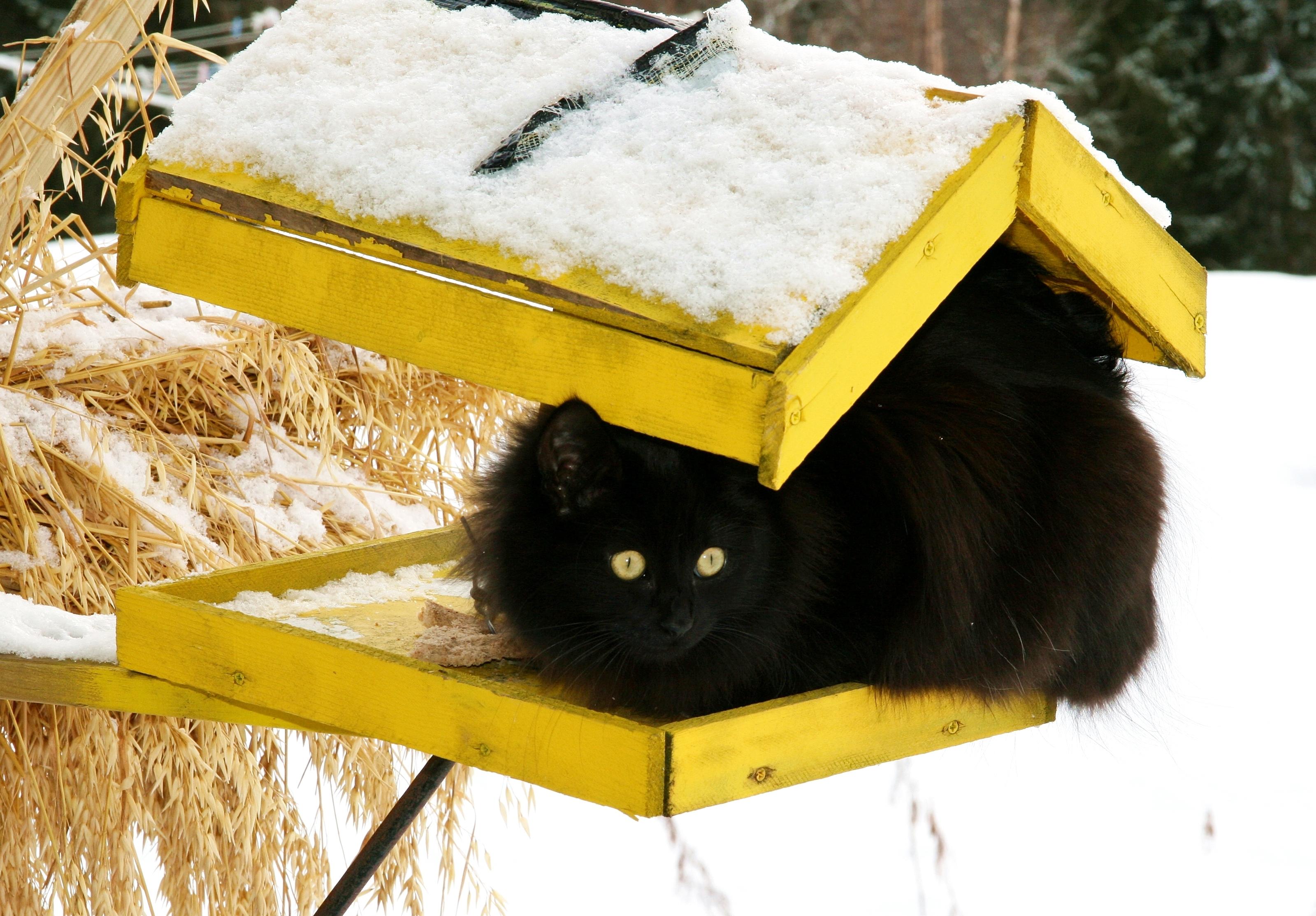 Ett sätt att förebygga salmonella hos katter är att hålla katterna borta från fågelborden - något som kan vara lättare sagt än gjort.