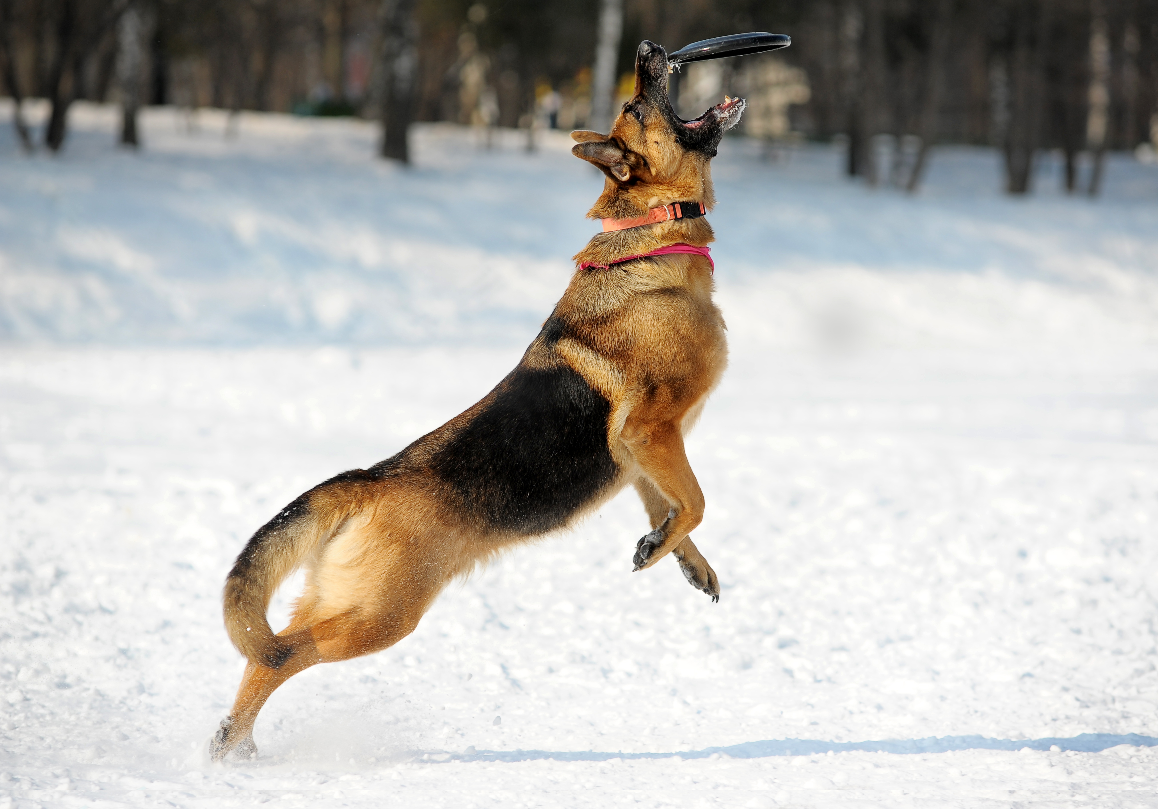 Ett positivt samband är att de hundar som får mycket lek och belöning av sin husse eller matte är de hundar som mår bäst.