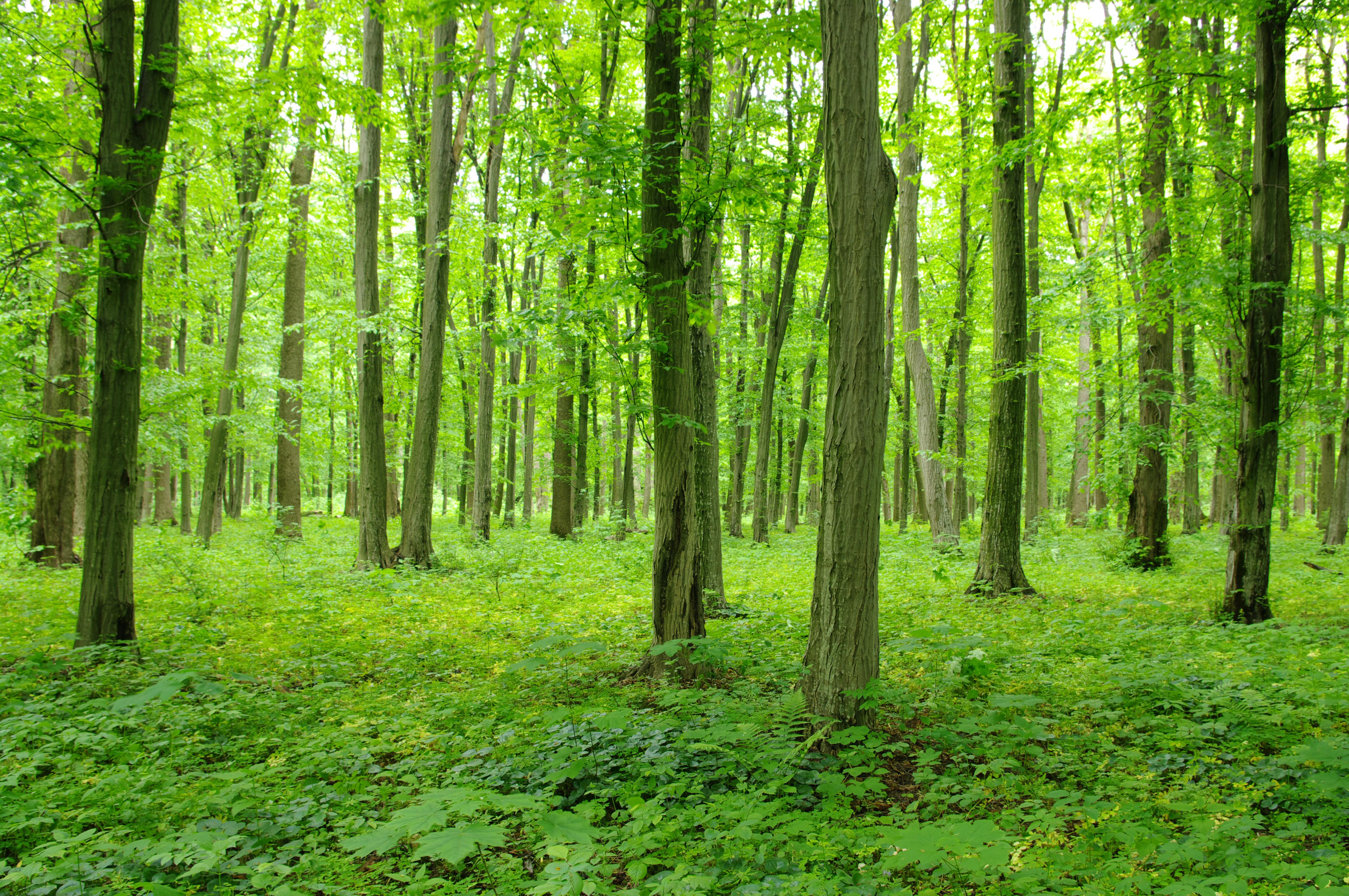 Ljuset som silar in mellan löven kan vara exempel på intryck som underlättar återhämtning från stress.