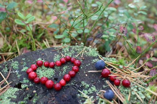 I en stenåldersdiet ingår bland annat bär, nötter, frukt, ägg, grönsaker och magert kött.