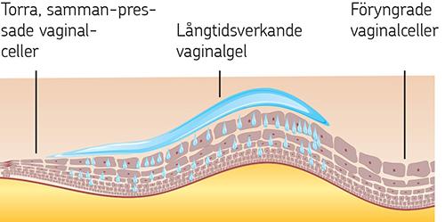 Gravid sköra slemhinnor